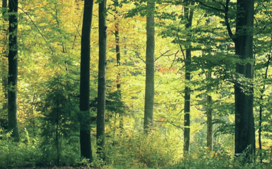 Photograph of a forest setting.